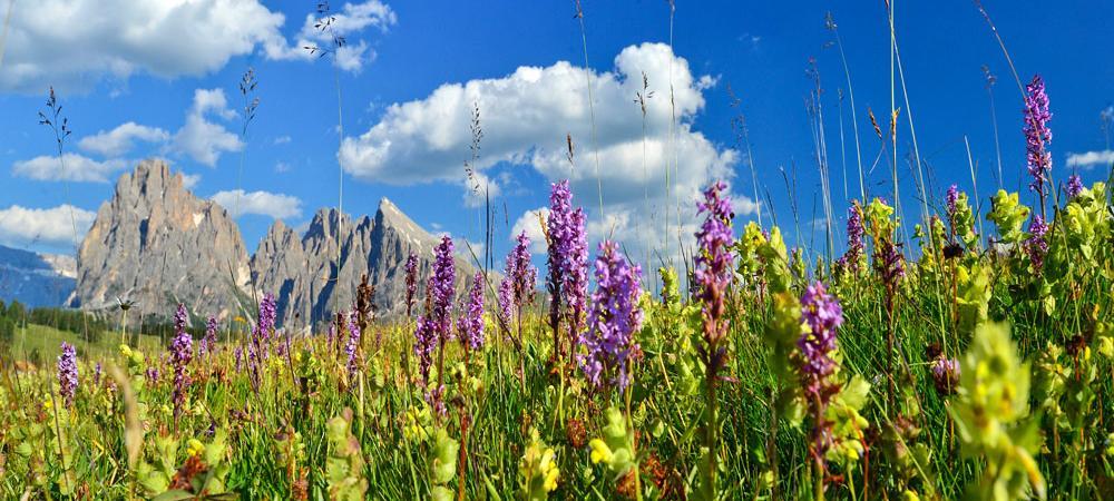 Berg.Frische in den Dolomiten