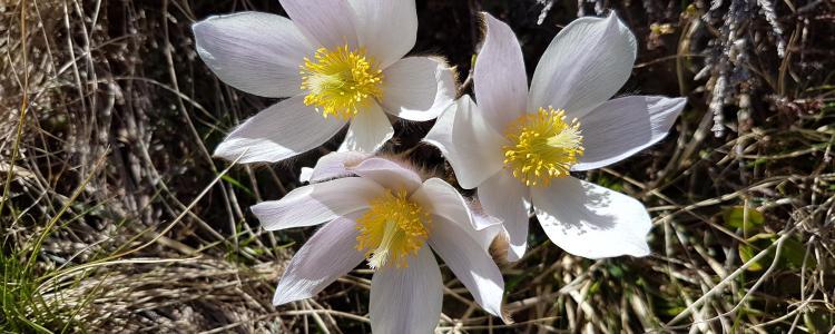 Beautiful may